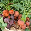 Fruits and Veggies Matter This Month