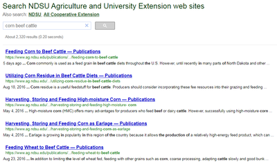 corn beef cattle search 1
