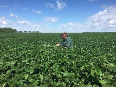 Angie Johnson soybean field