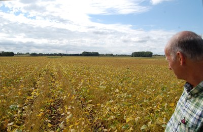Annual Highlights   Extension Soybean Story   Hans Kandel