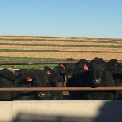 171010 black cattle bakken