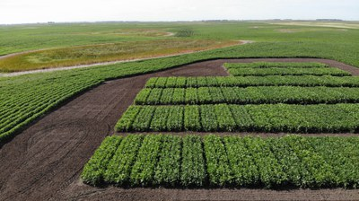 Soybean Variety Trial