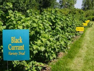 This is the Northern Hardy Fruit Orchard with some of the fruits it produces.