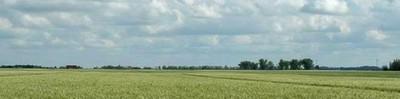 Steel Wheat banner