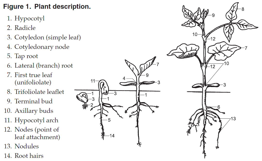 lifecycle of a plant worksheet