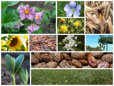 Row Crops Collage 2