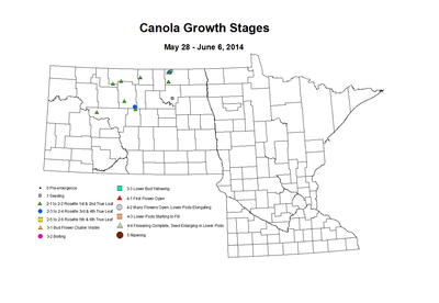 5 28 6 6 Canola GrowthStages ZGS