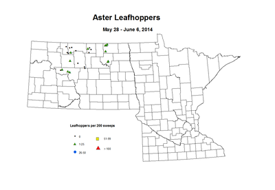5-28_6-6-Aster_Leafhoppers.png