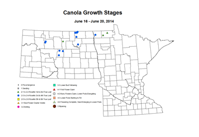 6 16 6 20 Canola GrowthStages ZGS