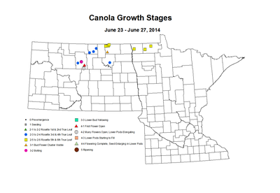 6 23 6 27 Canola GrowthStages ZGS