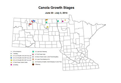 6 30 7 3 Canola GrowthStages ZGS