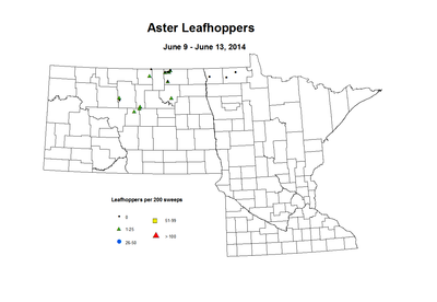 6-9_6-13-Aster_Leafhoppers.png