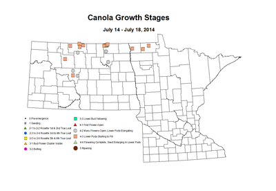 7 14 7 18 Canola GrowthStages ZGS