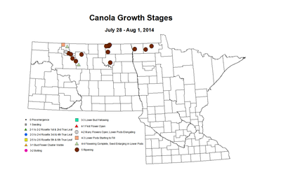 7 28 8 1 Canola GrowthStages ZGS