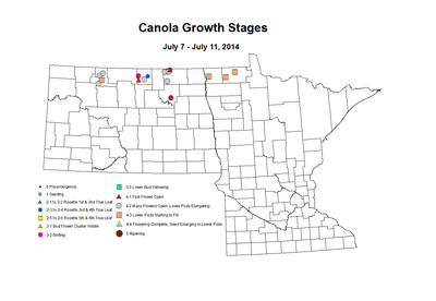 7 7 7 11 Canola GrowthStages ZGS