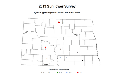 2013 Sunflower Insects Lygus Bug Damage on Confection