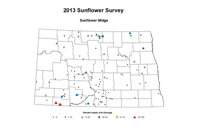 2013 Sunflower Insects Sunflower Midge