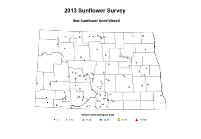 2013 Sunflower Seeded Red Sunflower Seed Weevil