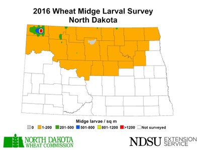 2016 Wheat Midge maps Larval Survey