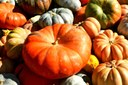 Add Some Pumpkin and Squash to Your Menu