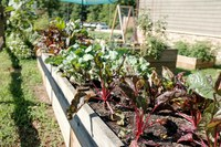 Community Gardening During a Pandemic