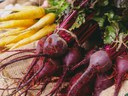 Getting to the Root of the Issue: Harvesting and Storing Root Crops