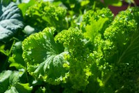 Let's Grow! Leafy Greens Are More Than Just Spinach, Kale