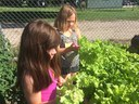 Encourage Kids to Become Good Veggie Eaters