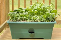 Try Indoor Herb Gardening