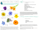 Know Your Edible Flowers
