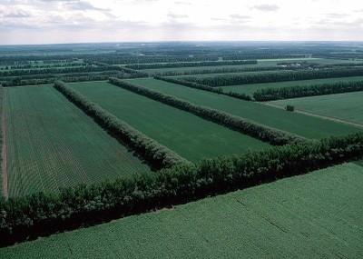 Field Windbreaks in North Dakota
