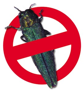 No EAB - small graphic