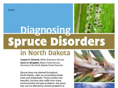 Diagnosing spruce disorders