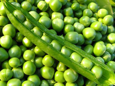 Shell peas are one of most popular vegetables grown in North Dakota.