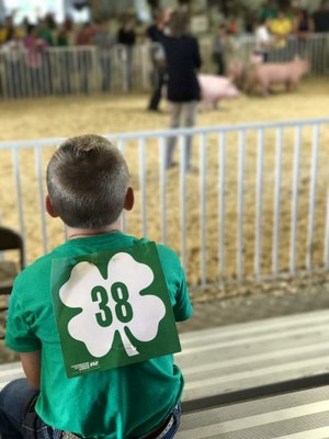4-Her Watching Swine Show