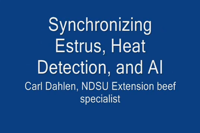 Estrous, Heat Detection and AI