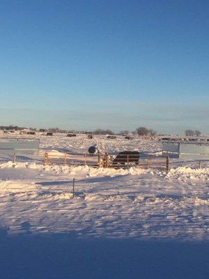 Winter Bale Grazing