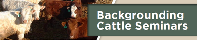 Backgrounding Cattle Seminars