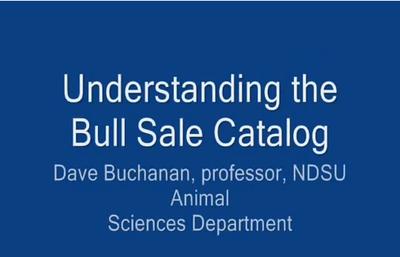 Bull Sale Catalog