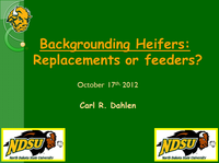 Backgrounding Heifers