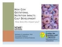 How Cow Gestational Nutrition Impacts Calf Development - Title Slide