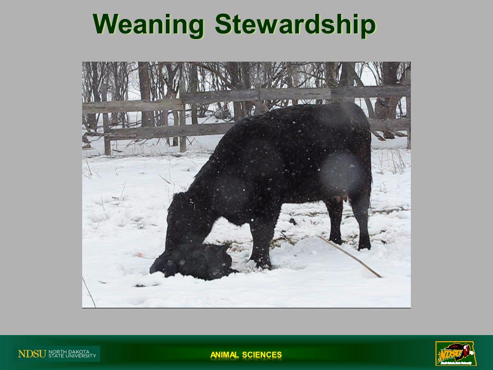 Weaning Stewardship Slide
