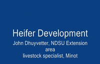 Heifer Development