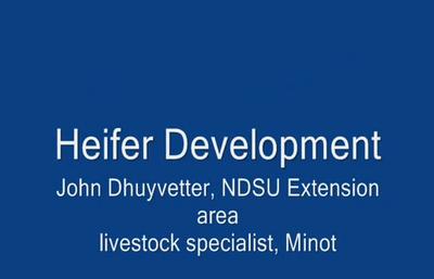 Heifer Development