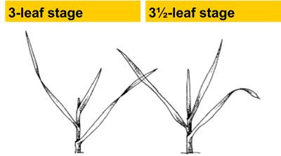 Grazing readiness stages