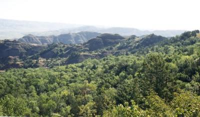 BadlandsForest2