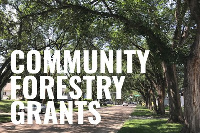 Community Forestry Grant small