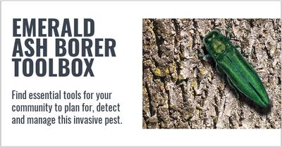 EAB Tool Box