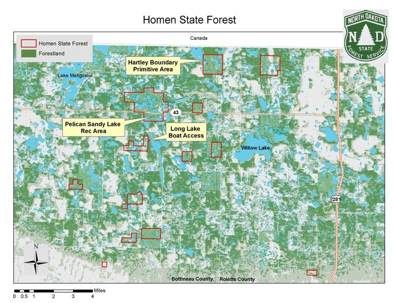homen state forest