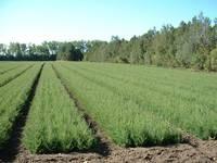 towner fields
